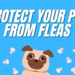 7 Ways to Protect Pets from Fleas & Ticks