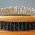 Best Brush for Akitas